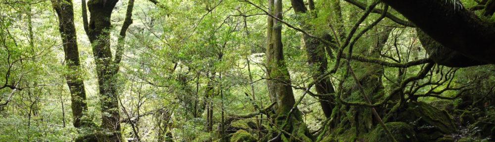 YakushimaForest