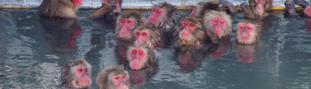 monkeys in the hot spring